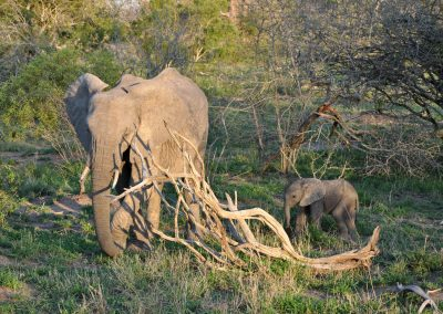 baby-elephant-and-mom-2000px