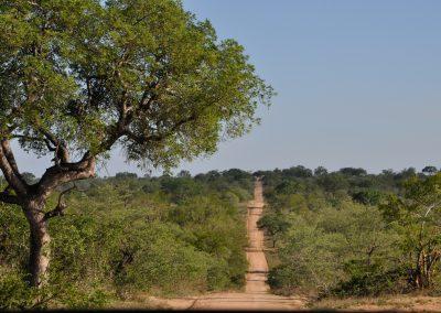bush-road-2000px