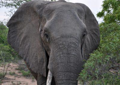 elephant-close-up-2000px