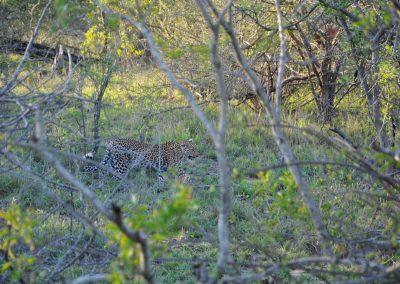 leopard-2000px