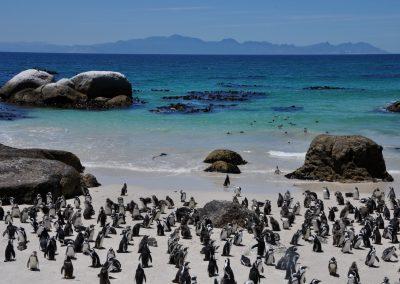 penguins-2000px