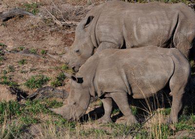rhinos-2000px