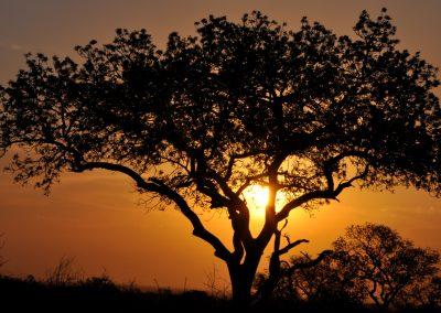 sun-in-tree-2000px