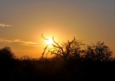 sunset-tree-2000px