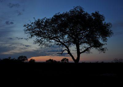 tree-silhouette-2000px