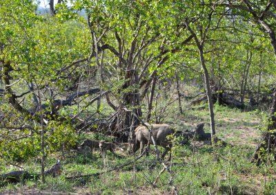 warthog-babies-2000px