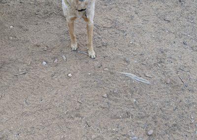 Moki with her chew toy