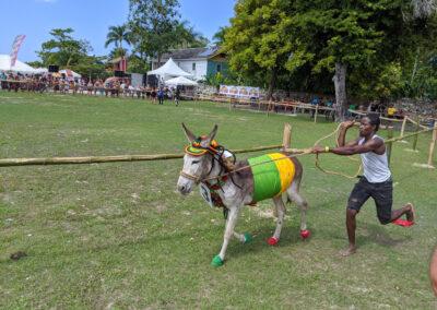 Donkey Races